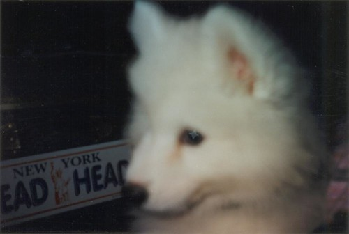 my pupper Cassidy at 11-12 weeks in 1995