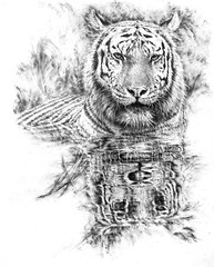 Tiger with reflection. (ctang) Tags: art drawing wildlife tiger fineart graphite pencildrawing wildlifeart 16000views wildlifedrawing tigerdrawing tigerwithreflection