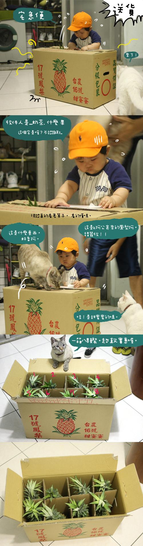 20080513鳳梨_002