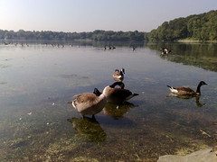 Jamaica Pond: N82 Photo Test