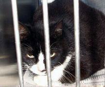 Kinship Circle - 2008-06-13 - Katrina-NOLA Rescuer Dead 07