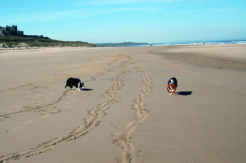 2652382891 76ec23ccda Dog friendly cottages in Northumberland