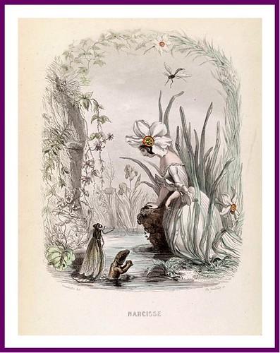 12-Narciso