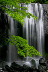 Tatsuzawa-fudoh Falls (Sky-Genta) Tags: white green water leaves waterfall rocks falls fukushima naturesfinest abigfave impressedbeauty ishflickr