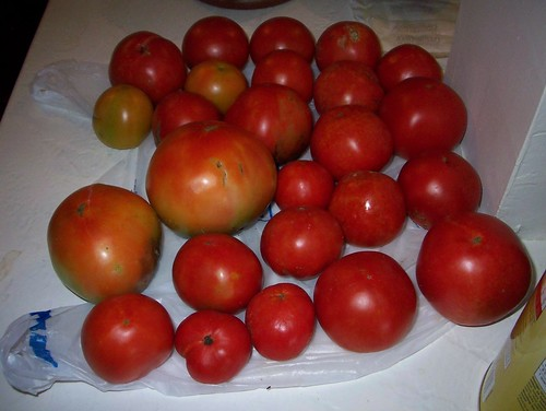 tomatoes from the garden