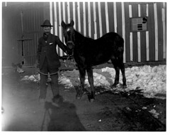 Man with young horse (Archives & Local History) Tags: shadow horse snow man history barn geotagged whatevertheweather colorado archive scanned archives snowdays oldphotographs oldpictures everything oldphotos dcl anything vintagephotos photographersshadow flickritis norules archivists glassplatenegative historicandoldphotos douglascountycolorado anythingeverything anythingallowed glassnegatives thebiggestgroup anythingandeverything 1millionphotos 10millionphotos scannedphotographs themostphotos tenmillionphotos thewholecaboodle fadedphotographs douglascountylibraries 5millionphotos historicimage douglascountyhistoryresearchcenter archivesonflickr onemillionphotos douglascountyhistoricalsociety dchrc archivesandarchivists geotaggedcolorado theanythinggroup allyoulike 100000000flickrphotos fivemillionphotos 19920010xxx0g31