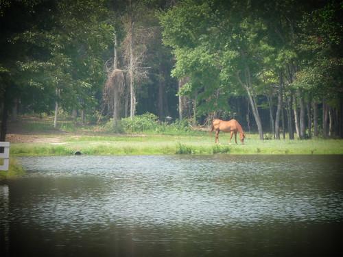 HorseFarm17.jpg by you.