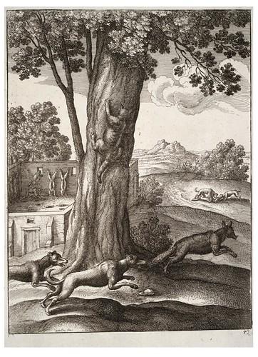 12- El zorro y el gato