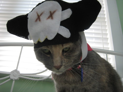 how do I look in my pirate hat?