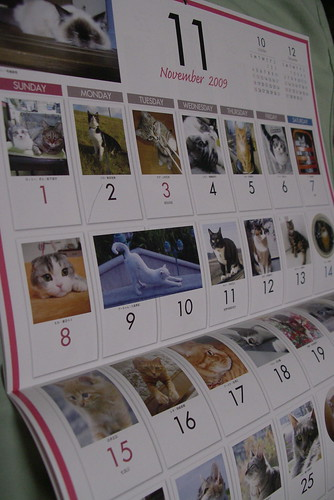 Cats Calendar 2009