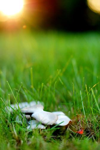 mushroom flare
