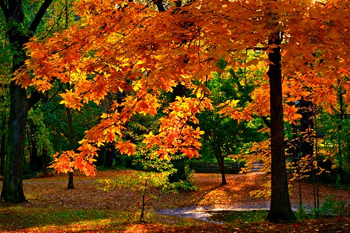 Autumn Splendor / DMCleveland