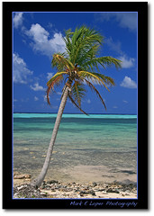 Single (markeloper photography) Tags: ocean tree beach palm cayman grandcayman markeloper