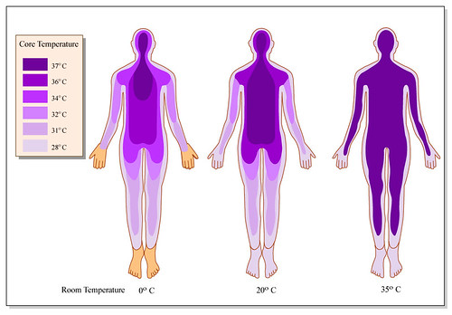 diagrams of human body. Human Body Temperature