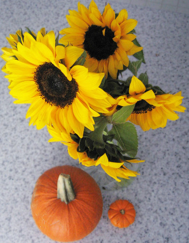 Autumn sunflowers and pumpkins