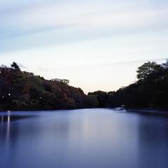 Odette, Swan Pond (F_blue) Tags: tokyo kodak hasselblad kichijoji  500cm inokashirapark portra160vc  planart c8028 fblue2008