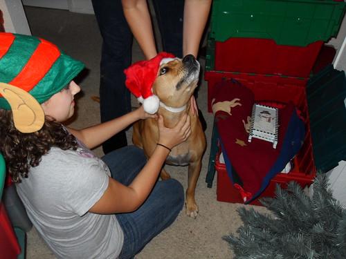 christmas decor 2008 (7)