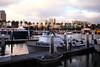 Small Victory (segamatic) Tags: beach canon boats eos harbor long shift tilt canontse45mmf28 photofaceoffwinner pfogold 5dmarkii fotocompetition fotocompetitionbronze 5dmkii dtlb1208