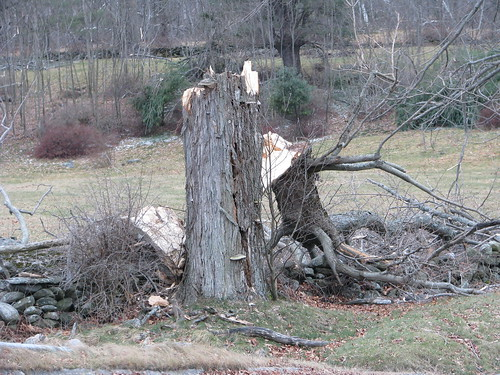 Another broken tree from the ice storm
