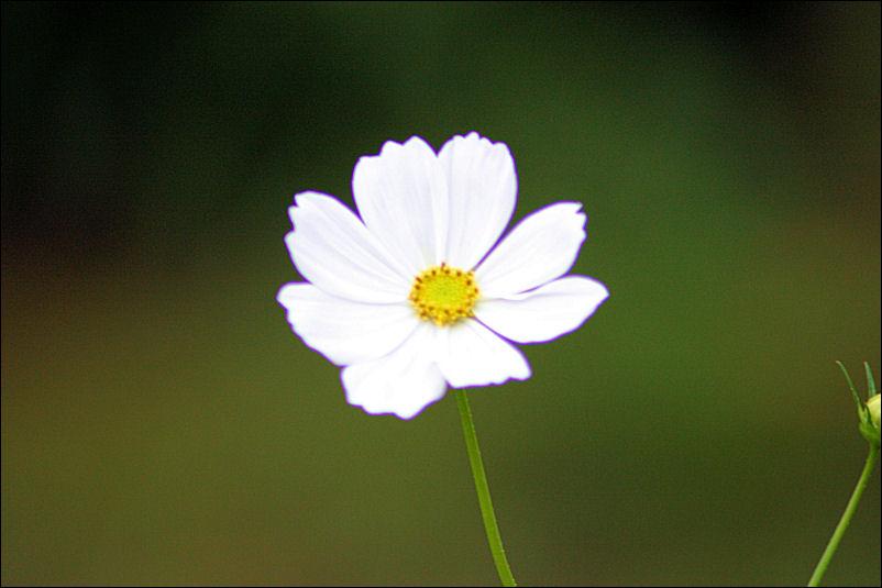Campo do Flor