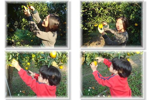 你拍攝的 採橘樂1。
