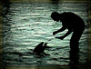 Puppies of the Ocean (dart5150) Tags: chicago water silhouette dolphin sheddaquarium