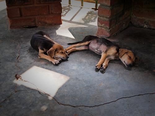 Cachorritos de siesta