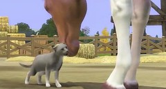 Sims 3 Pets 41