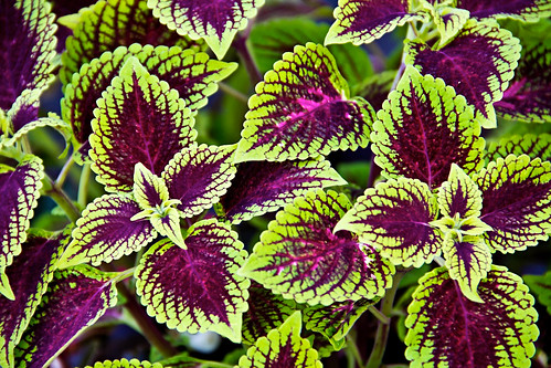 Plant On Sale