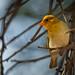 Bird in Kruger.