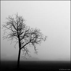 (Vincenzo D'Ortenzio) Tags: silhouettes natures blancinegre venafro mywinners topofthefog artlegacy betterthangood vincenzodortenzio thedortenzios venafrum