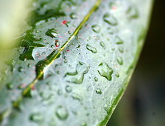 Rain On You (Emmy Gee) Tags: cold green texture rain leaf natural earth iwantspring stillwinter