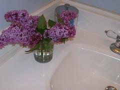 Lilacs--4-9-08 001