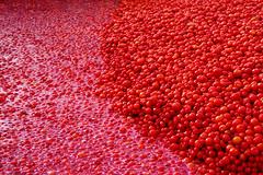Roig - Red - Rojo - Rouge - Rosso (marathoniano) Tags: red naturaleza nature tomato rouge rojo tomatoes alicante 101 tomate vitamina laromana vitamine alacant pasvalenci roig tomaca tomaques marathoniano goldstaraward