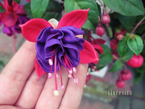 the strangest flower