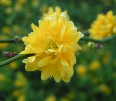 It's yellow !! (berryvantuijl) Tags: park flowers thuis 2008 soe bloemen gorinchem blueribbonwinner flowerotica flickrsbest mywinners anawesomeshot thatsclassy berryvantuijl flowersarefabulous rubyphotographer