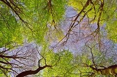 Up Up and Away! (Bob Cox Photography) Tags: pov perspective blueribbonwinner abigfave badburyclumps ysplix brillianteyejewel