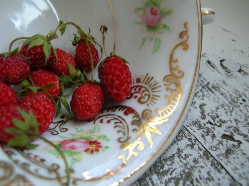 Petite Strawberries in a Teacup