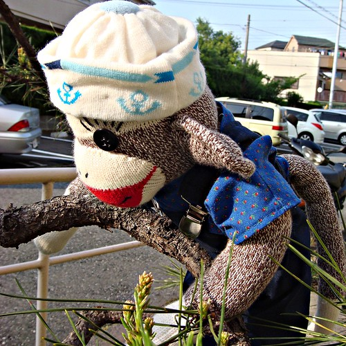 Ko looks up at a tree and decides he wants to play sock monkey games! (by martian cat)
