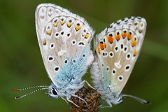 Insects (Ed Walthaus) Tags: france pentax butterflies insects vlinders insecten hrault naturesfinest specanimal lambeyran justpentax edwalthaus walthaus pentaxk100dsuper lambayran