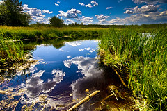 Marsh (Chadwise) Tags: sky nature water grass clouds landscape beaver marsh fortmcmurrayalberta
