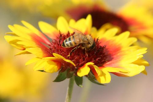 Honeybee Heaven