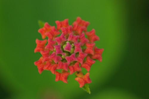 20080803072花