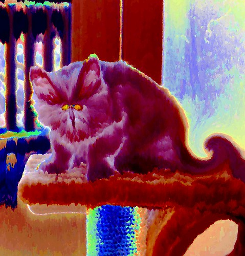 Feline Curmudgeon