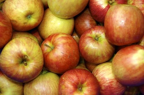 りんご|無料写真素材