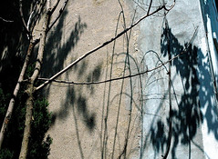 Wall (alankin) Tags: trees light 15fav abstract texture philadelphia nikon shadows pennsylvania d70s 1870mmf3545g philly walls nikkor mountairy treebranches stucco mtairy almostmonochromatic interestingness465 i500 15views niknala 1300045cmu 20may2007