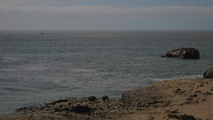 Seal Rock IMG_1375.JPG Photo