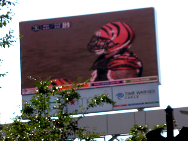 Bengals on Fountain Square