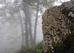 (Alieh) Tags: tree nature mushroom rain fog persian woods iran north persia fungi iranian  gilan   northofiran     fooman  aliehs alieh    roodkhancastle