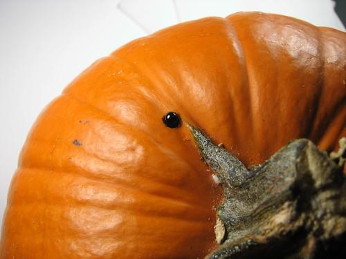 DarkPumpkin - 07